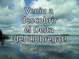 Veniu a descobrir el Delta del Llobregat!